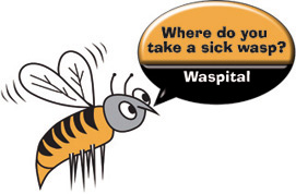 where do you take a sick wasp   wasp it all